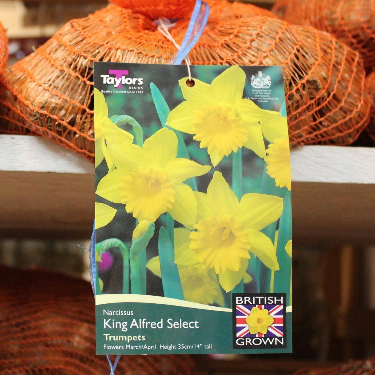 daffodils-spec-nov